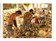 Du Lịch Sinh Thái Xứ Dừa Bến Tre