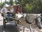 Du lịch sinh thái xứ dừa Bến Tre ( 2 ngày 1 đêm )